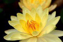 Flowers / by Tawanda Jones-Dickinson