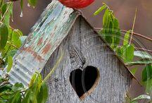 Casine per uccellini