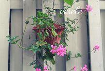 Garden ideas / Gardening and flowers