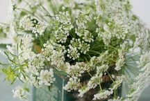 The Language of Flowers...Q