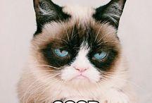 grampy cat
