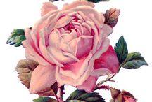розы вырезать