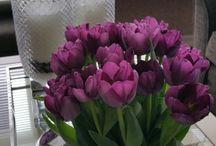 tulipaner i stua.