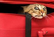Pushee' Cat! / Pauvre, pauvre... Hic! Pushee' Cat!