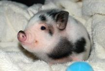 Piggies♡