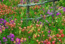 Flower & Green / Flower, green, trees, bouquet