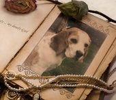 Hunde - Beagle
