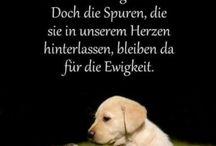 love dogs too