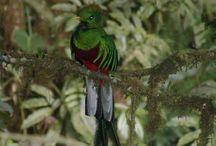 BirdWatching in Costa Rica / Birdwatching tours in Costa Rica