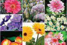 Belezas da natureza / Cores...formas....Cheiros...sabores... texturas....e encantos da NATUREZA