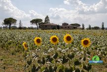 Val D'Orcia / My photos of Val D'Orcia - Toscana Click the link get full size download, canvas and other products of the photos