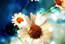 Flores do meu jardim...