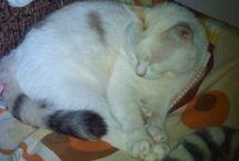 My favorite cat