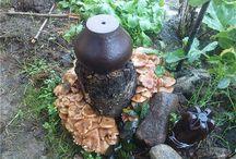 грибы на даче