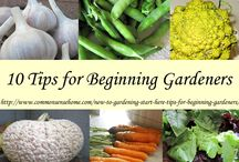 Homesteading gardening