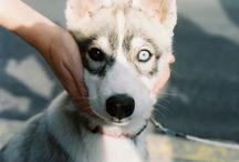 Puppy  /