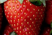 Erdbeerfelder