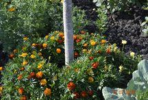 Все о рассаде и цветах