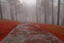 _The wonders of nature: Fog_