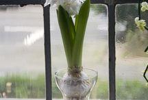 Indoor Flower Concepts