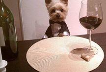 doggy's❤❤