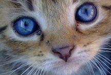 Cute Cats/Kittens