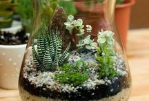Mehikasvit lasimaljakoissa