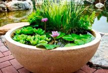 pond. idea