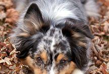 Family pet / by Julie Casstevens