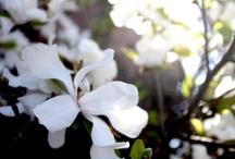 Spring Splendor  / by Rachel Hope