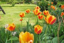 Ogród-porady