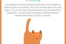 Katt... Kroppsspråk m.m