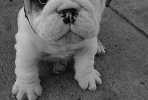 Puppy Love / by Sydney Stratton