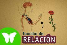 función de relacion