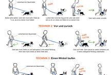 Hunde Erziehung