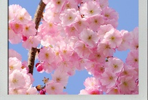 Colour Snapshots Blog - Flower Power
