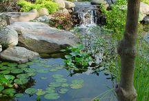 Jennies trädgård