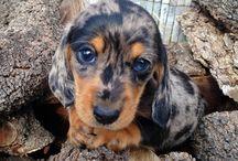 kutyusok