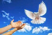 Mezi Zemí a Nebem / Všechno krásné pro radost a potěšení duše.