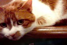 <3 my Cat / by Linda Jeffers Eddy