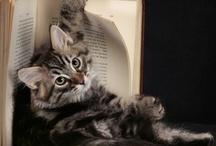 Cats / by Stephanie Adams