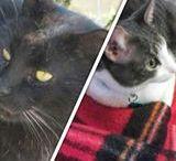 Harry e Noir / i gatti più belli del mondo.       senza offesa, Martina anche Mora e Moona sono belle