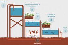 hydroponic n aquaponic