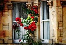 ❀ Windows