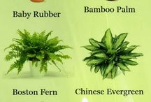 air clean plants