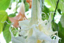 Inredning, blommor