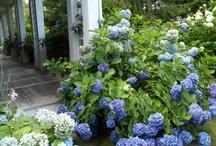Lavender / by Hampton Hostess CG3 Interiors-Barbara Page Home