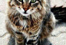Katzis