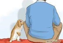 Kanin og gode råd