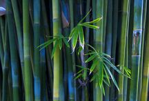 Palm Trees, Bamboo and Trees with Distinction / by Rebecca Raney